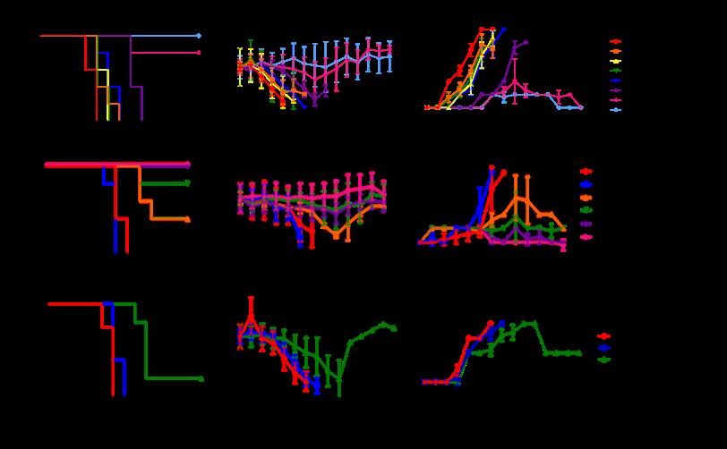 Influenza Mouse Models