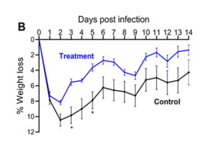 Figure 1. Mouse skin infection model. Area of lesion (A) and weight loss (B) measured daily for 14 days post infection with 1x107 CFU of S. aureus USA300. Model shows animals that received either treatment or placebo control intraperitoneally 4 hours prior to infection.